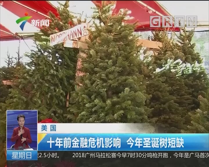 美国:十年前金融危机影响 今年圣诞树短缺