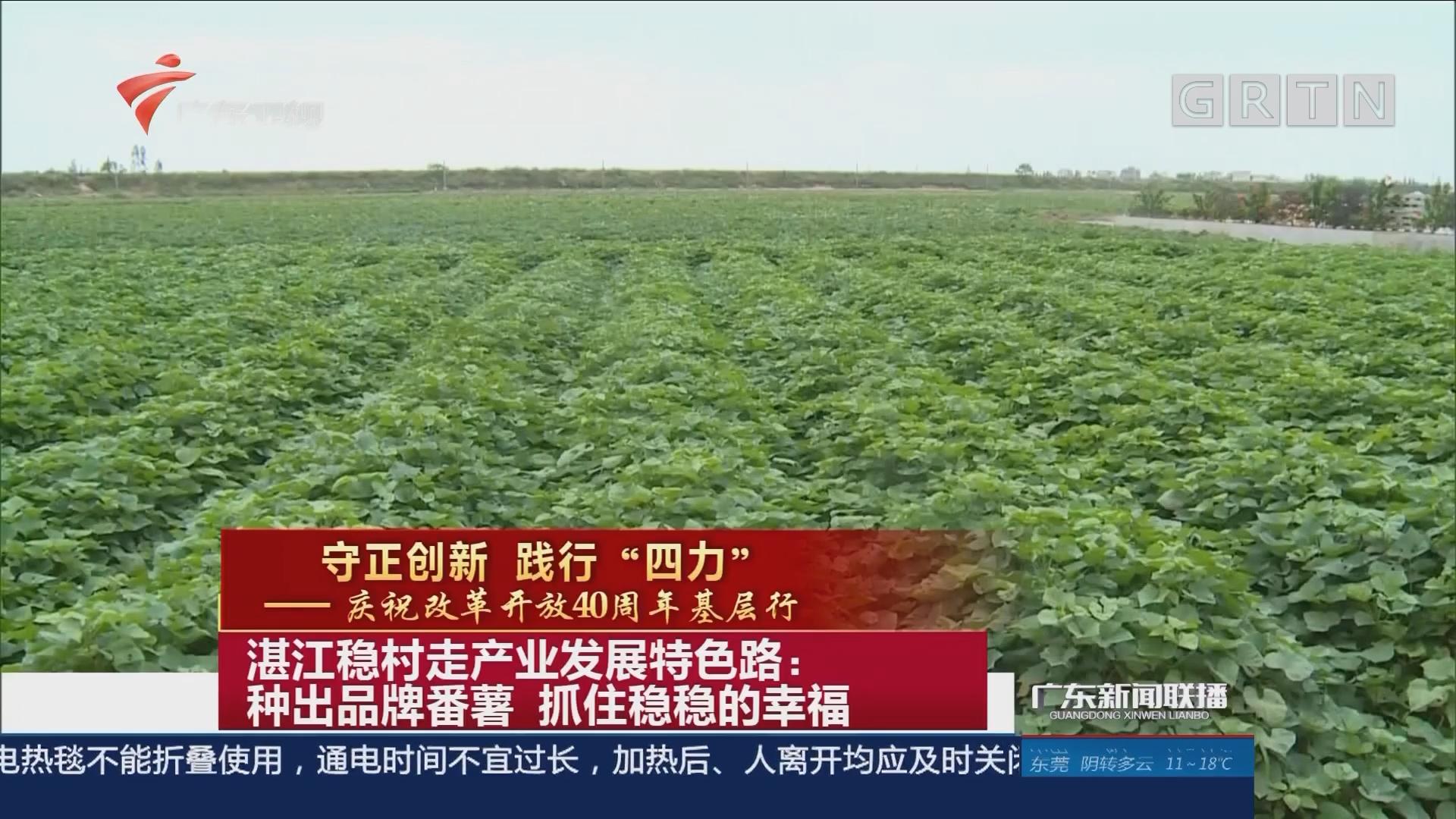 湛江稳村走产业发展特色路:种出品牌番薯 抓住稳稳的幸福