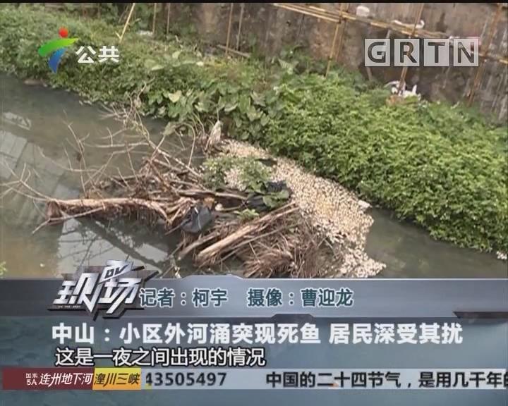 中山:小区外河涌突现死鱼 居民深受其扰