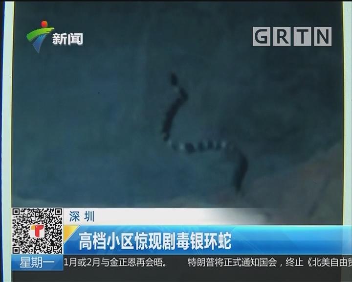 深圳:高档小区惊现剧毒银环蛇