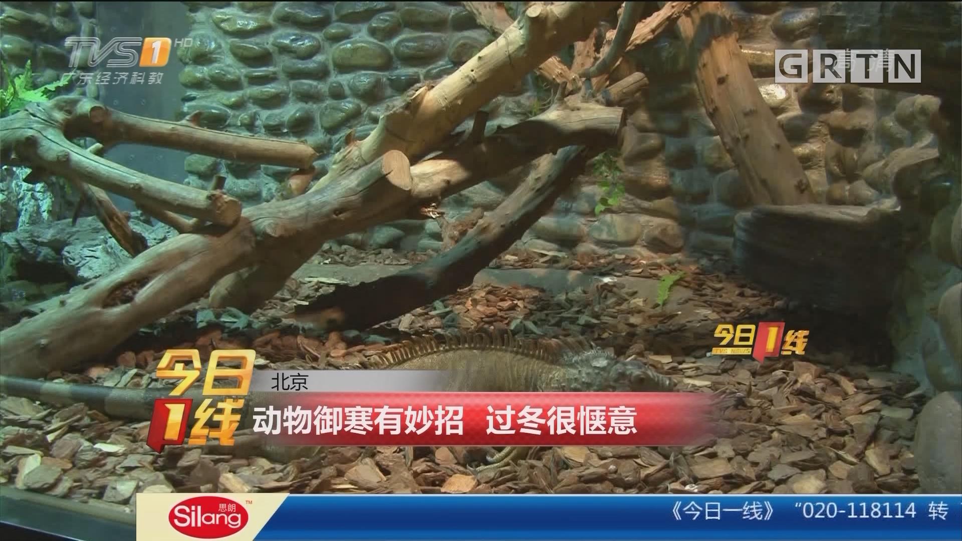 北京:动物御寒有妙招 过冬很惬意