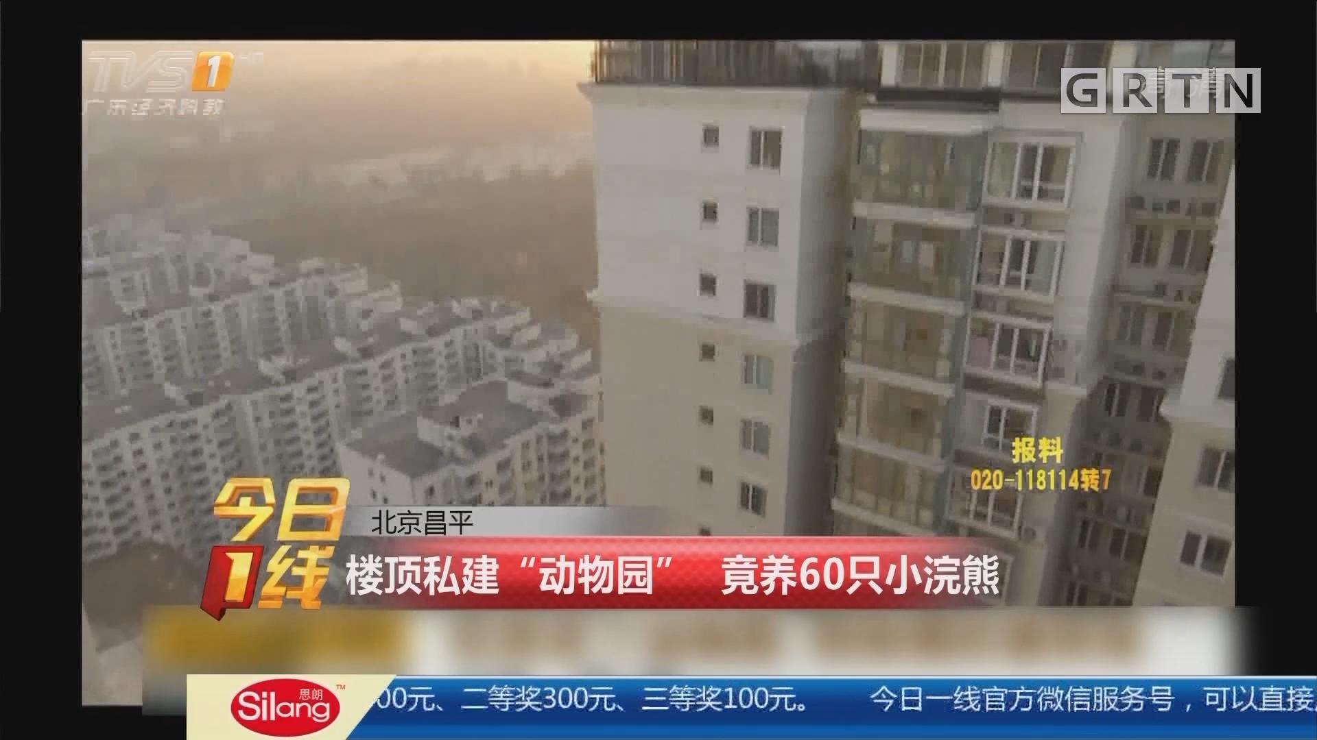 """北京昌平:楼顶私建""""动物园"""" 竟养60只小浣熊"""