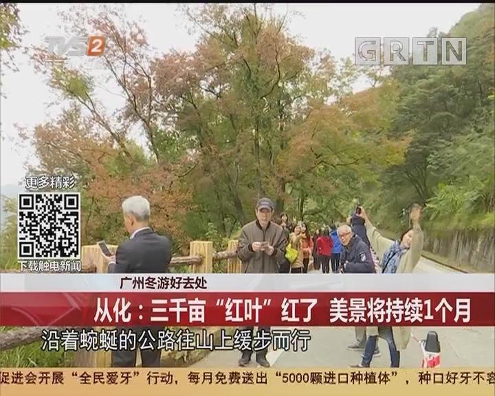 """广州冬游好去处 从化:三千亩""""红叶""""红了 美景将持续1个月"""