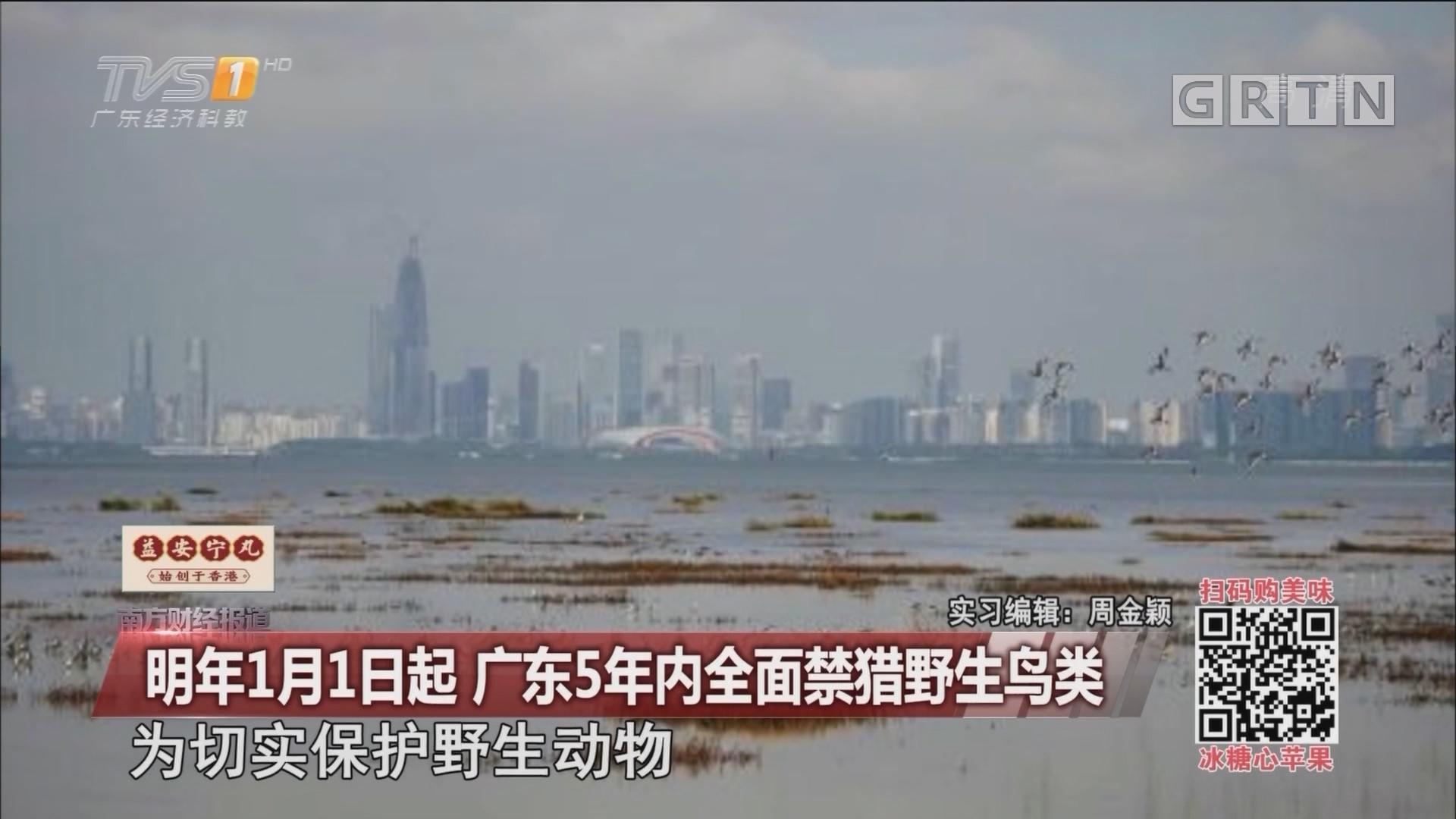 明年1月1日起 广东5年内全面禁猎野生鸟类