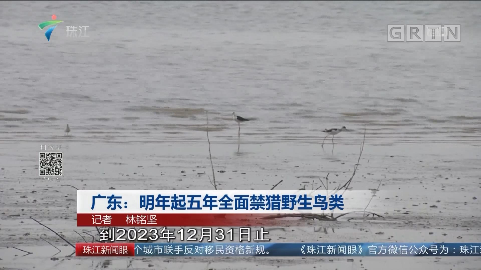 广东:明年起五年全面禁猎野生鸟类