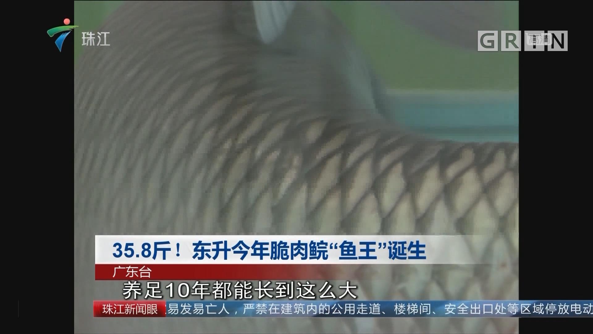 """35.8斤!东升今年脆肉鲩""""鱼王""""诞生"""