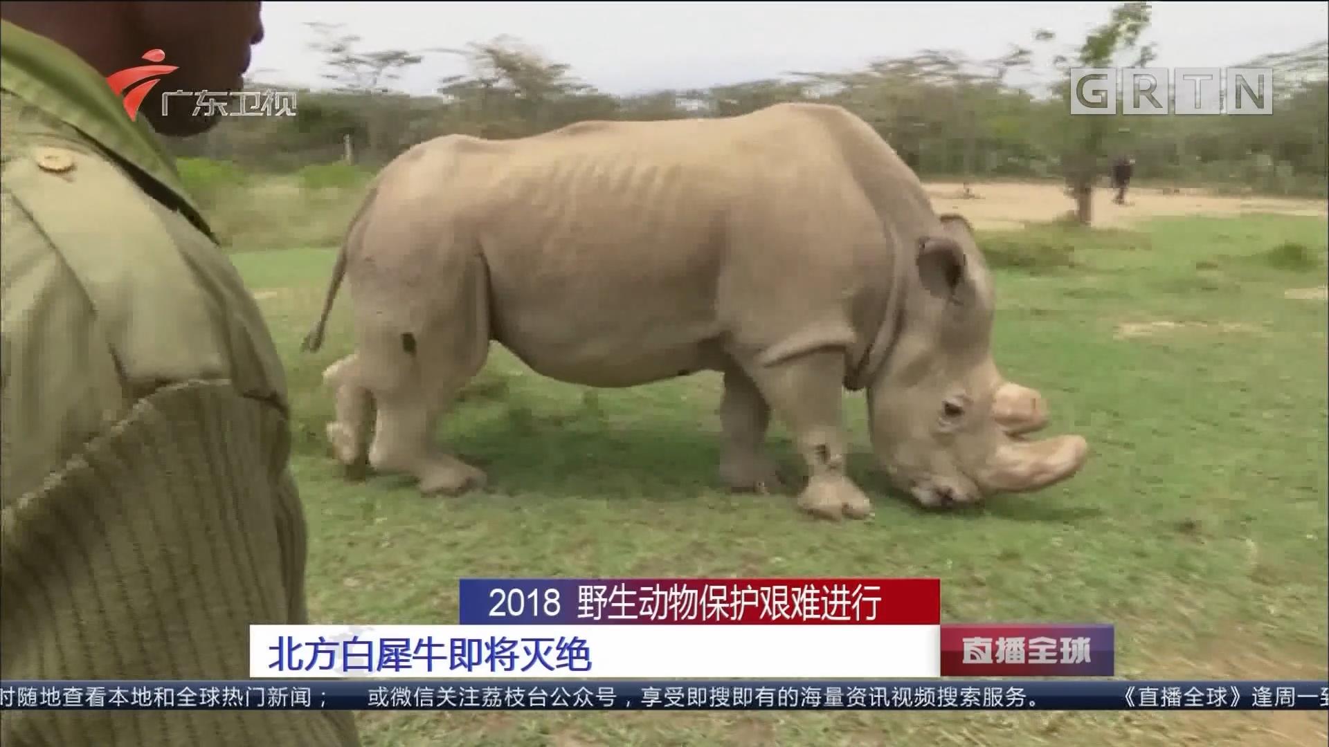 2018 野生动物保护艰难进行:北方白犀牛即将灭绝