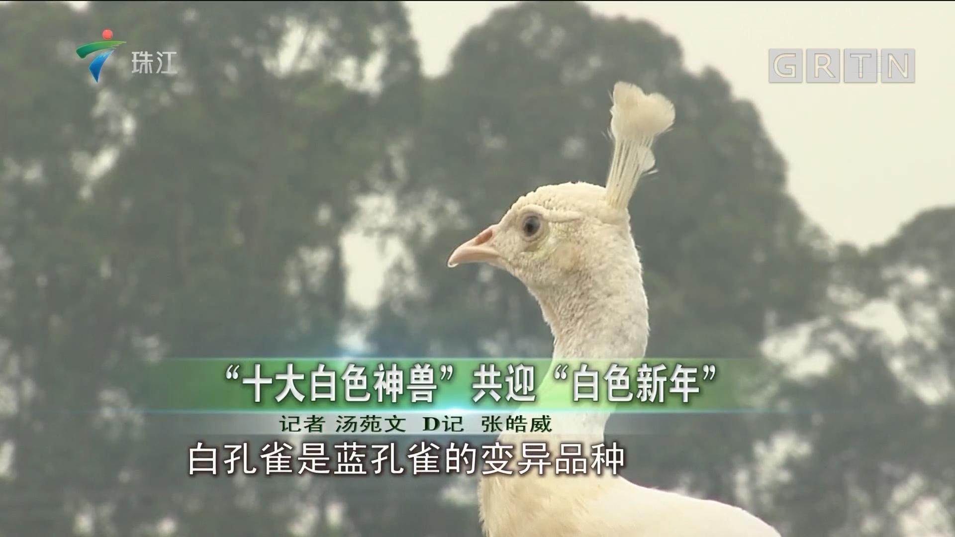 """""""十大白色神兽""""共迎""""白色新年"""""""