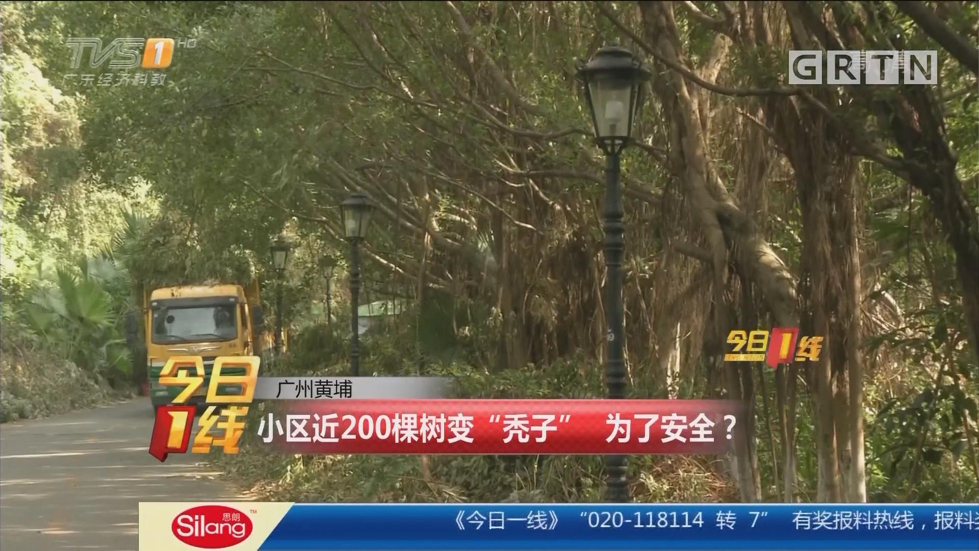 """广州黄埔:小区近200棵树变""""秃子"""" 为了安全?"""