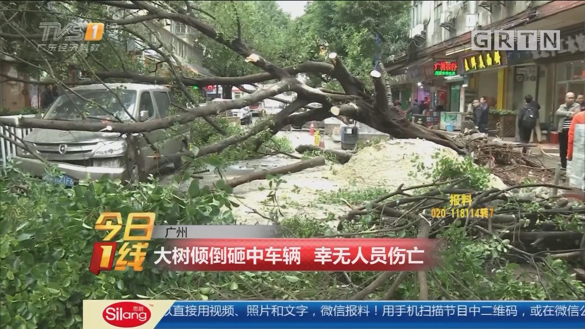 广州:大树倾倒砸中车辆 幸无人员伤亡