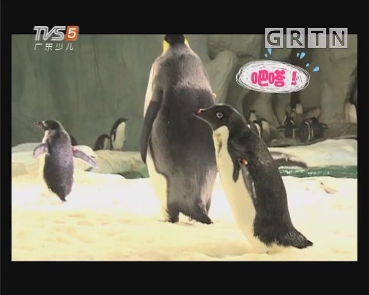[2018-12-15]动物笑当家