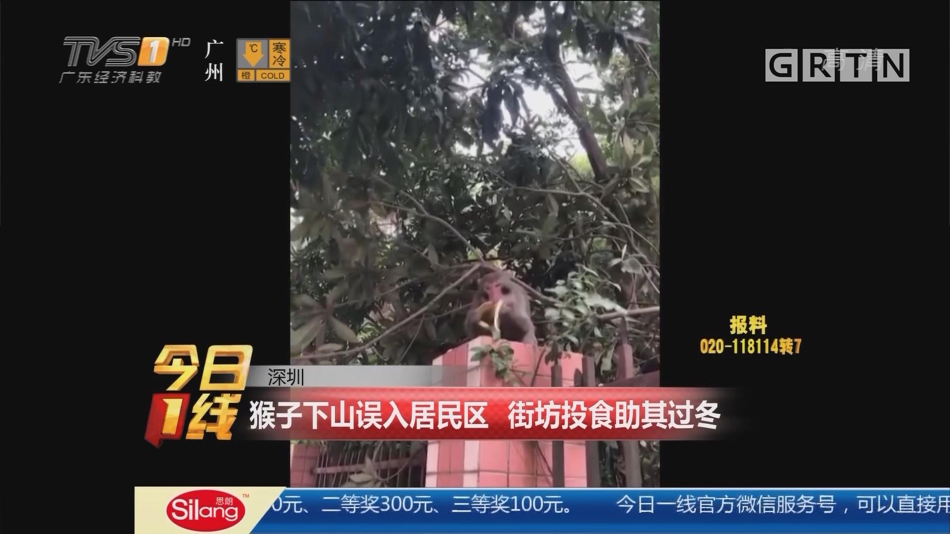 深圳:猴子下山误入居民区 街坊投食助其过冬
