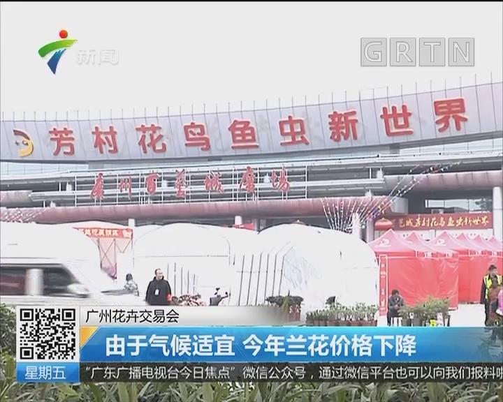 广州花卉交易会:由于气候适宜 今年兰花价格下降