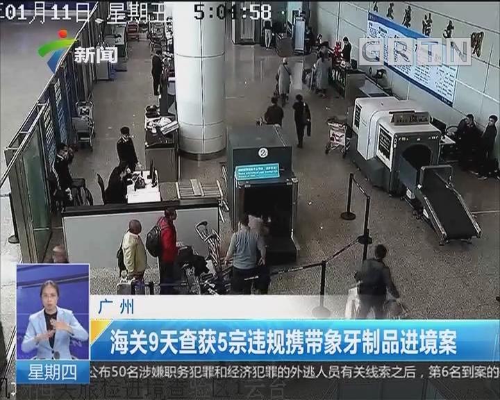 广州:海关9天查获5宗违规携带象牙制品进境案