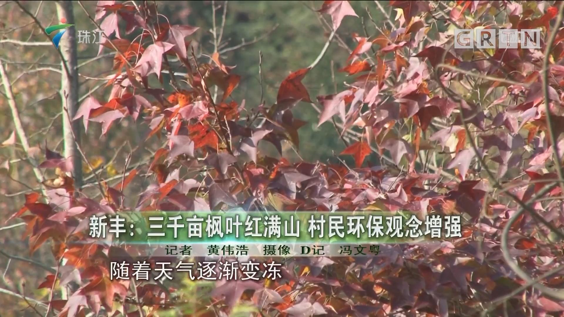 新丰:三千亩枫叶红满山 村民环保观念增强