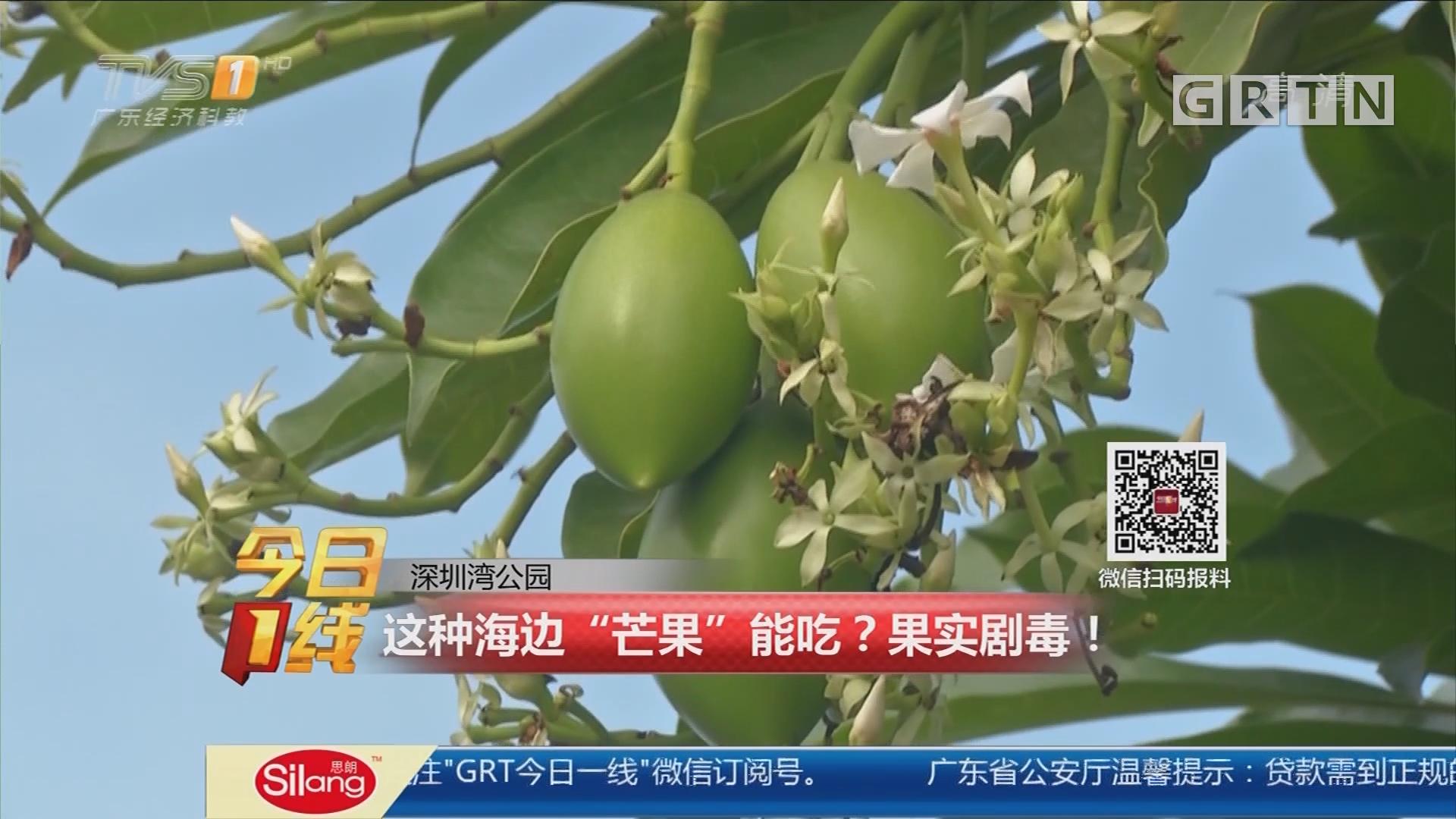 """深圳湾公园:这种海边""""芒果""""能吃?果实剧毒!"""