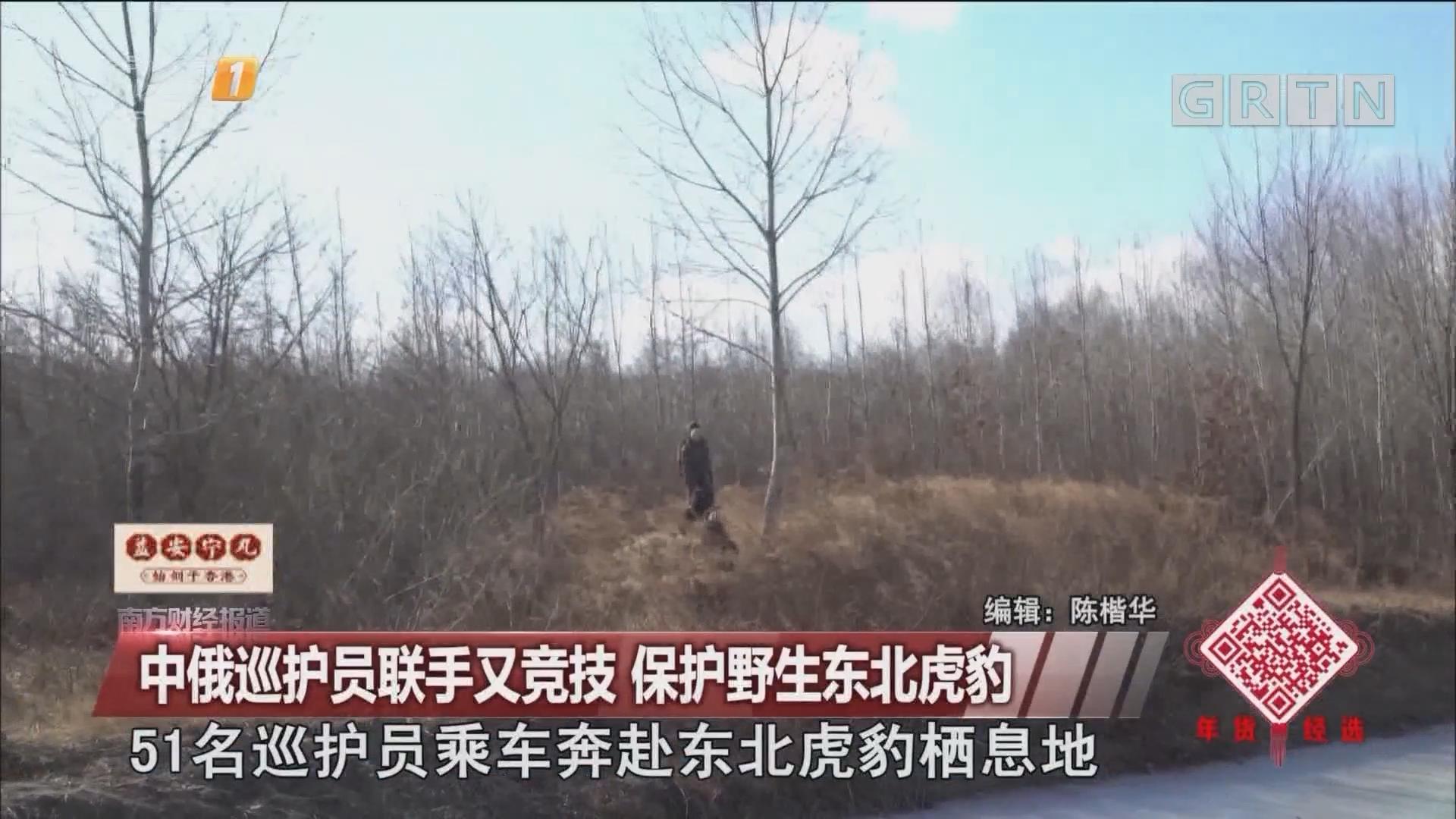中俄巡护员联手又竞技 保护野生东北虎豹