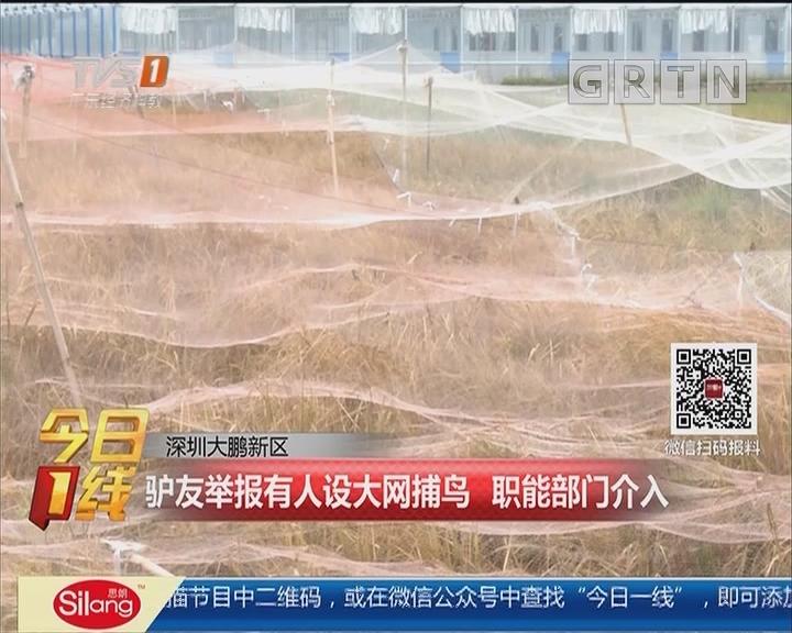 深圳大鹏新区:驴友举报有人设大网捕鸟 职能部门介入