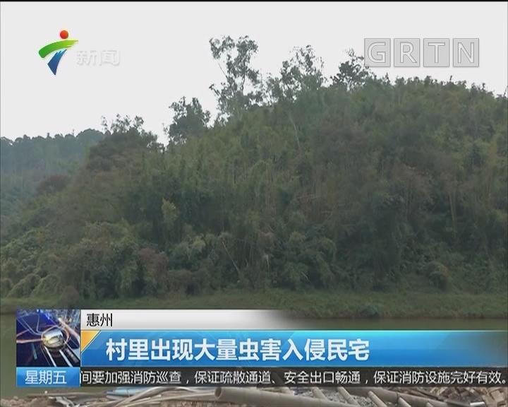 惠州:村里出现大量虫害入侵民宅