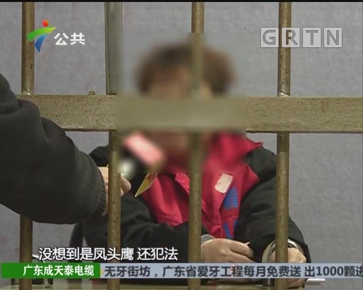 韶关:街坊非法收购保护动物 被依法逮捕