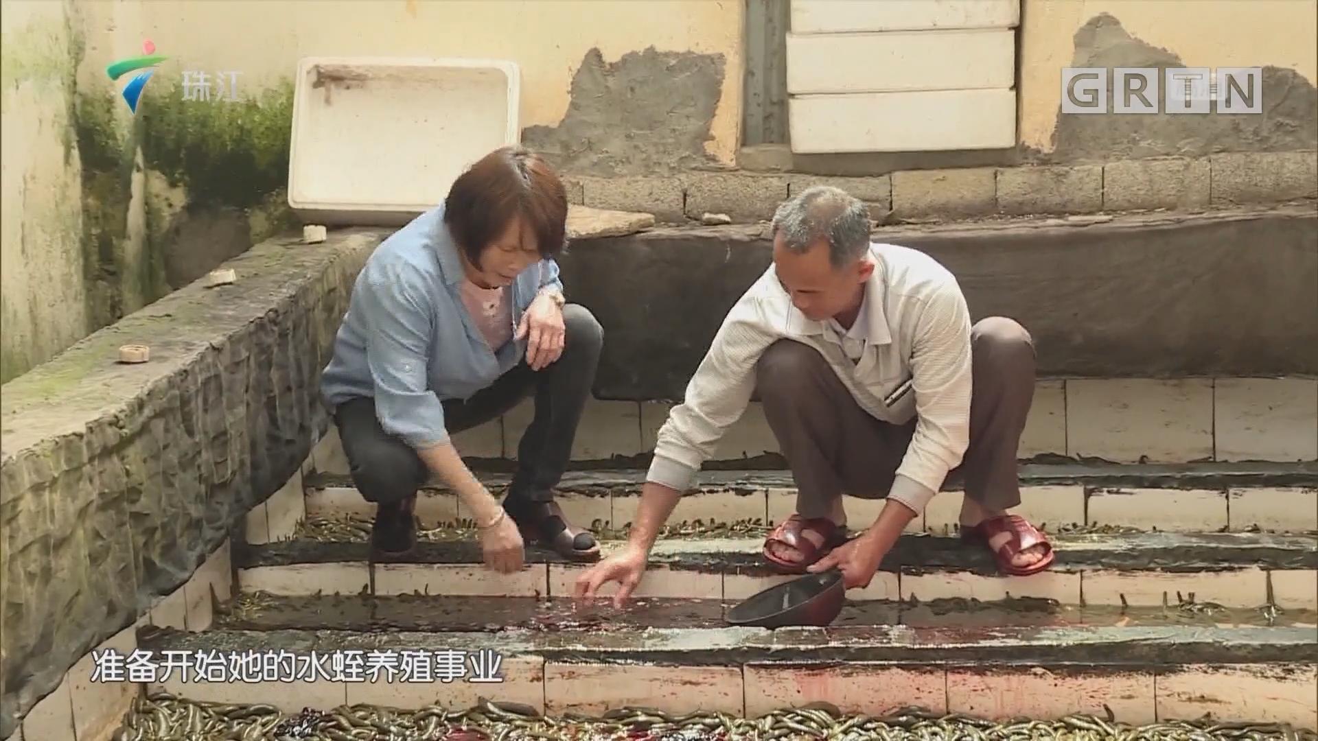 """[HD][2019-01-21]摇钱树:养殖业的""""软黄金"""""""