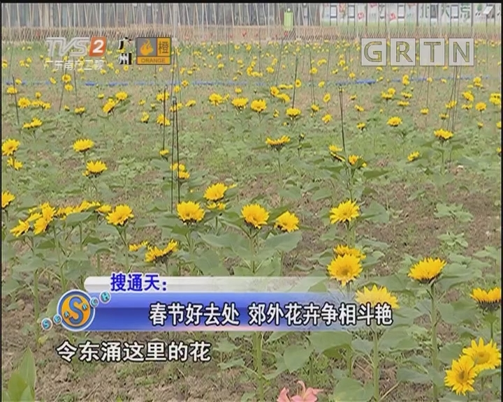 春节好去处 郊外花卉争相斗艳