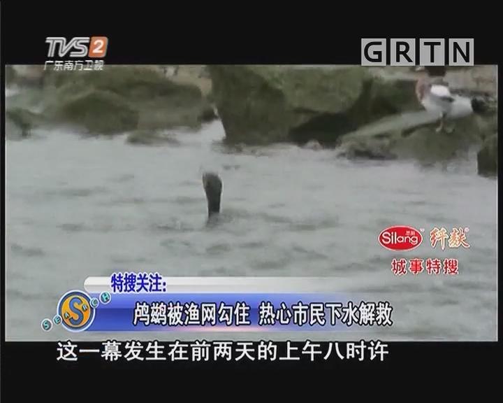 鸬鹚被渔网勾住 热心市民下水解救