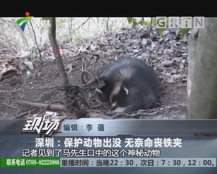 深圳:保护动物出没 无奈命丧铁夹