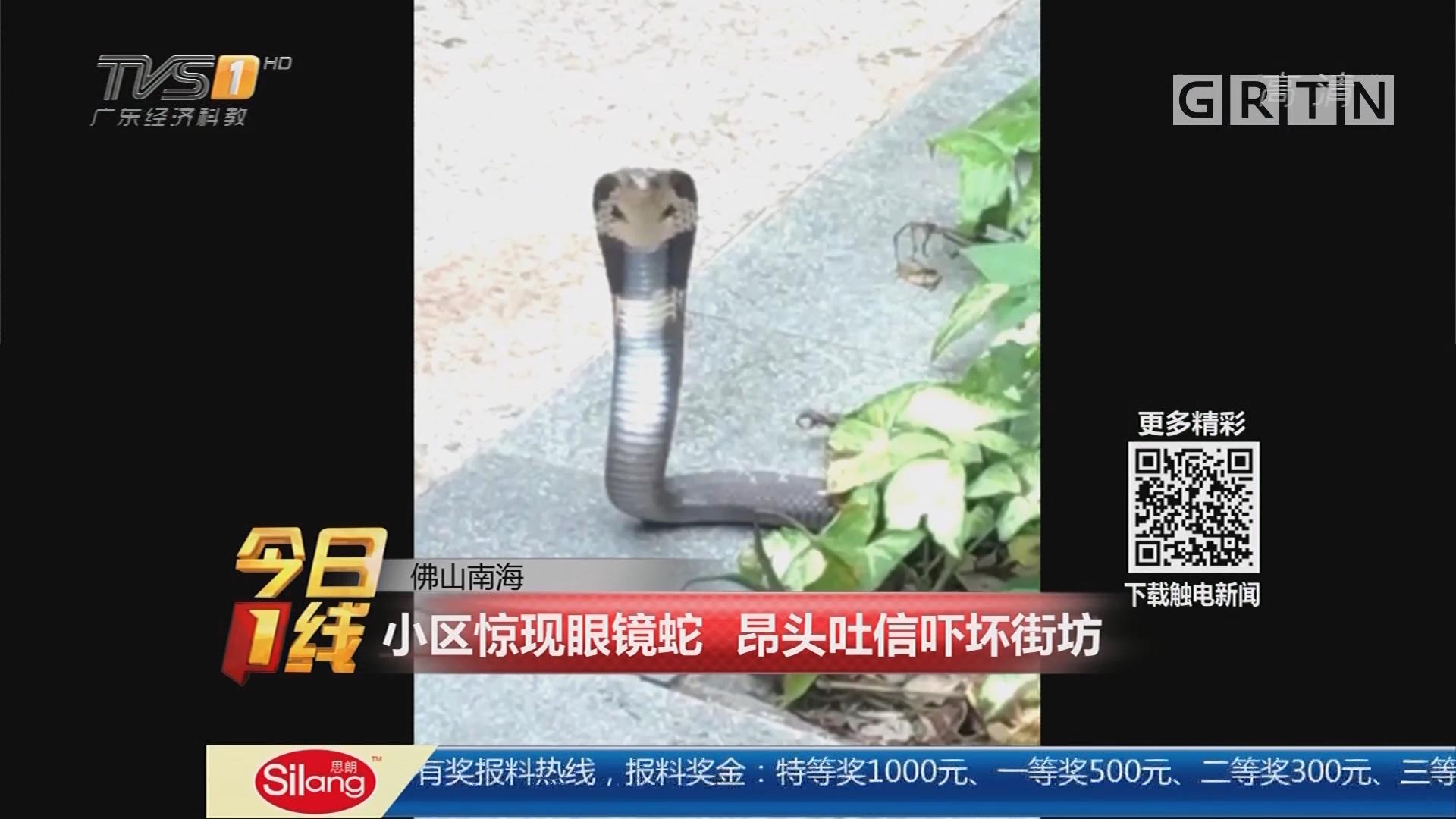 佛山南海:小区惊现眼镜蛇 昂头吐信吓坏街坊