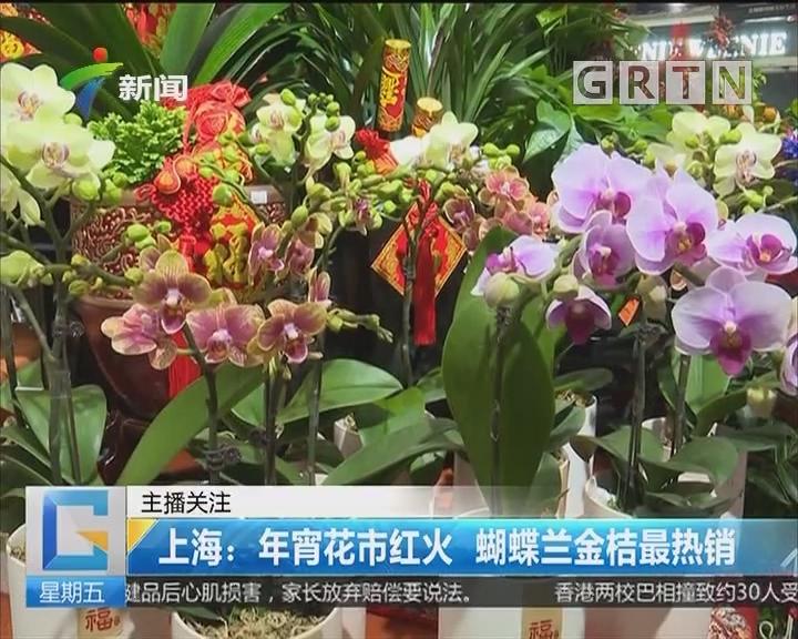 上海:年宵花市红火 蝴蝶兰金桔最热销