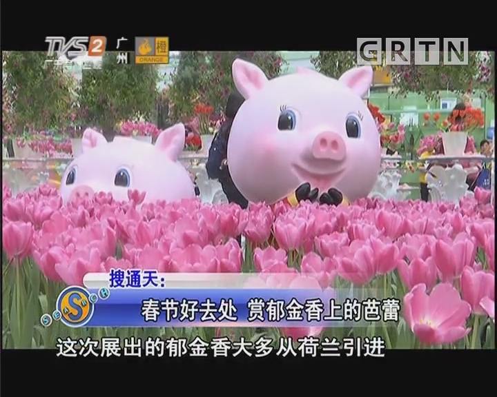 春节好去处 赏郁金香上的芭蕾