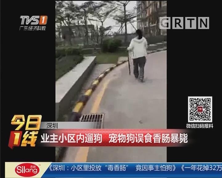 深圳:业主小区内遛狗 宠物狗误食香肠暴毙