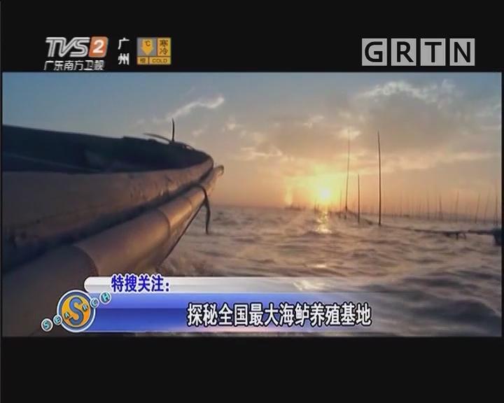 探秘全国最大海鲈养殖基地