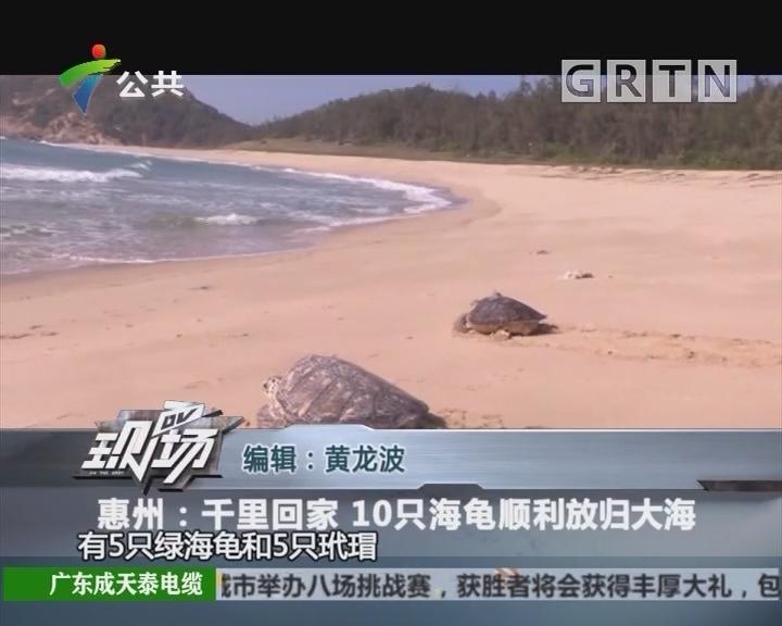 惠州:千里回家 10只海龟顺利放归大海