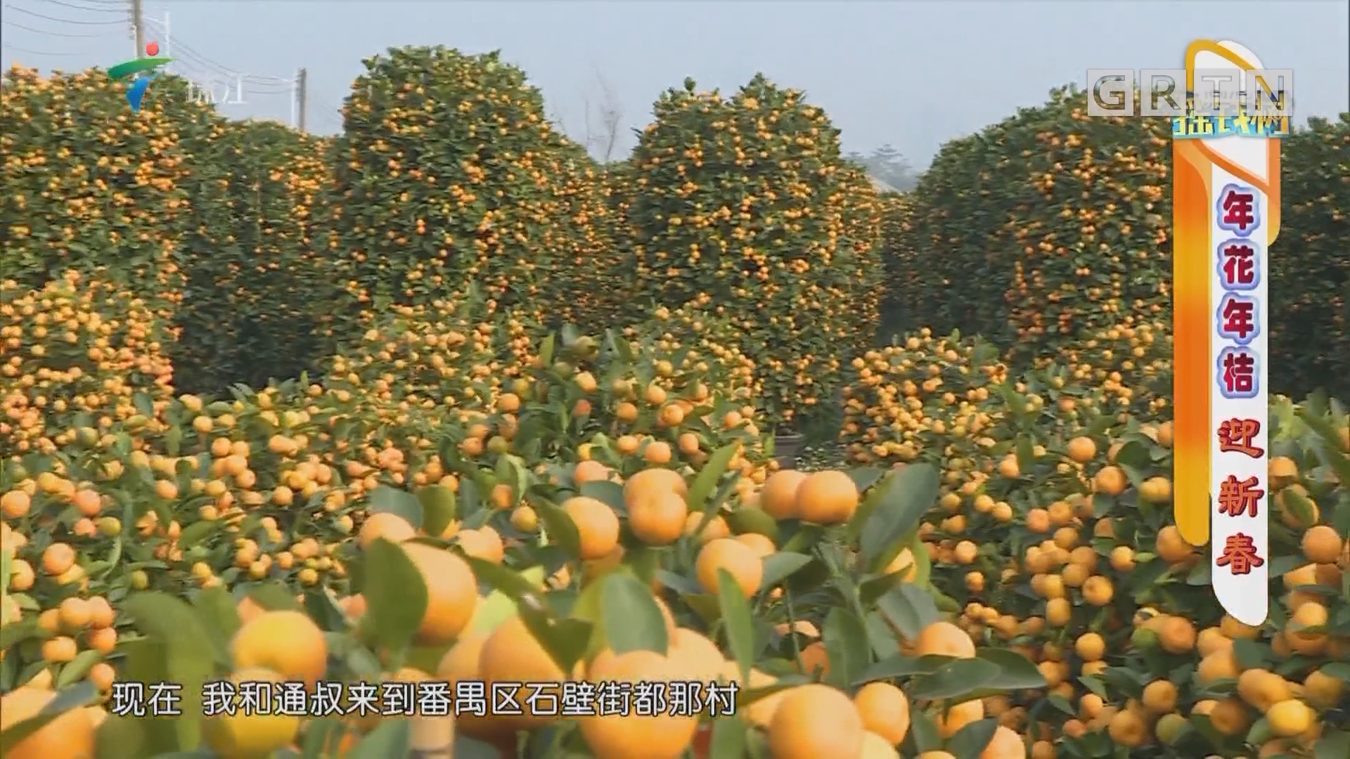 [HD][2019-01-28]搖錢樹:年花年桔迎新春