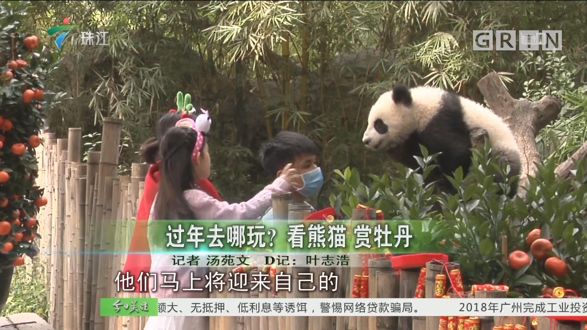 过年去哪玩? 看熊猫 赏牡丹