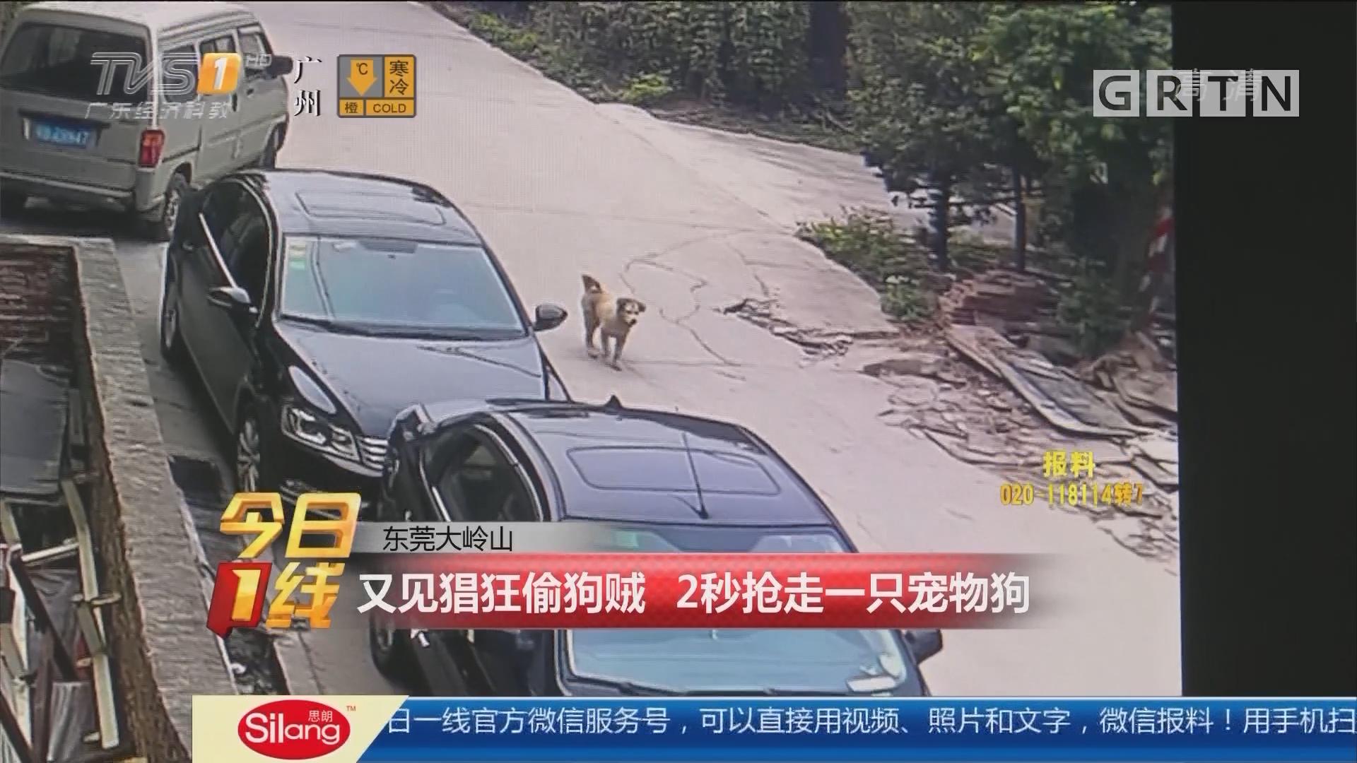 东莞大岭山:又见猖狂偷狗贼 2秒抢走一只宠物狗