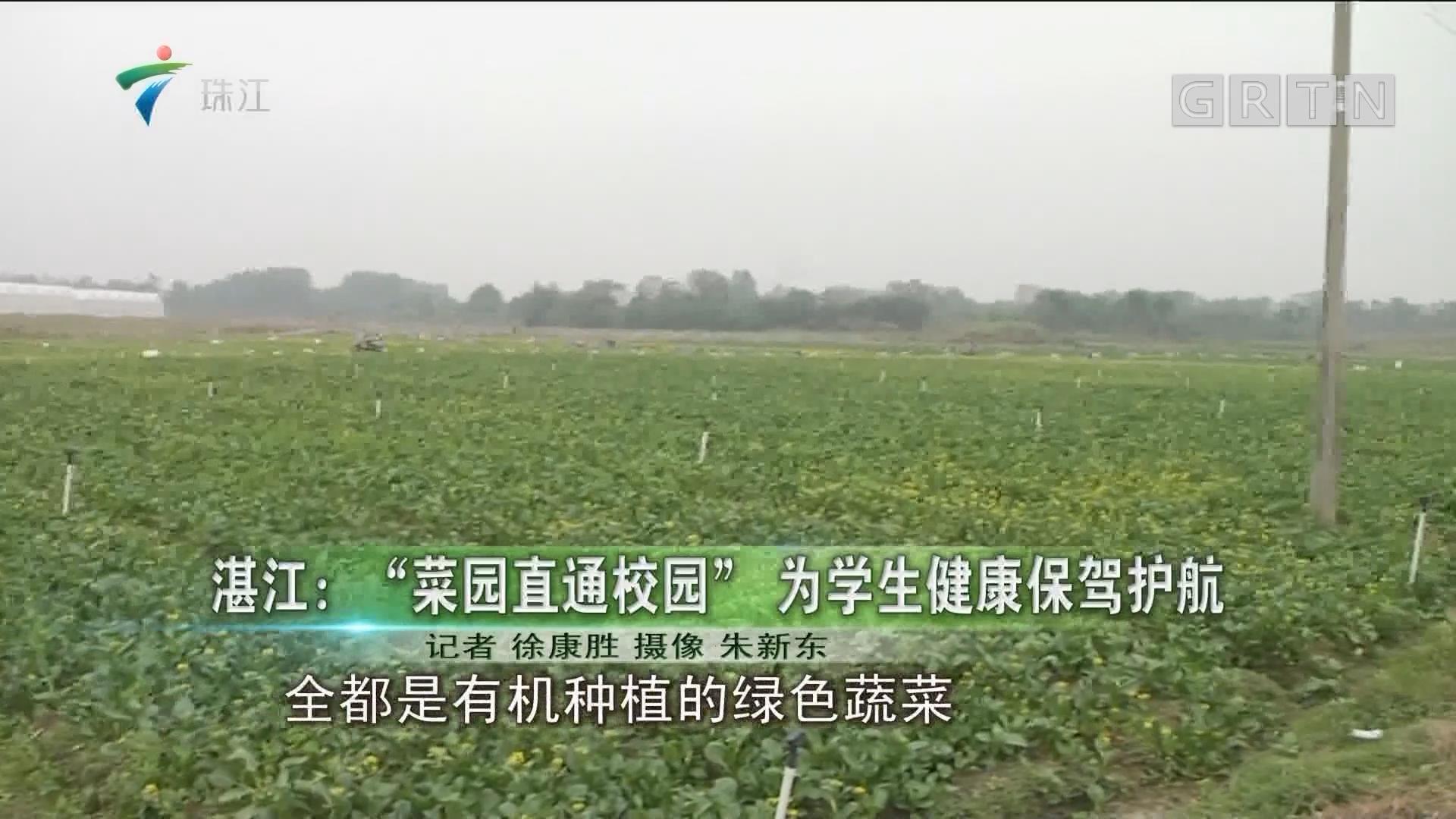 """湛江:""""菜园直通校园""""为学生健康保驾护航"""