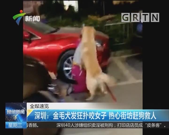 深圳:金毛犬发狂扑咬女子 热心街坊赶狗救人