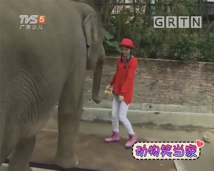 [2019-01-12]动物笑当家