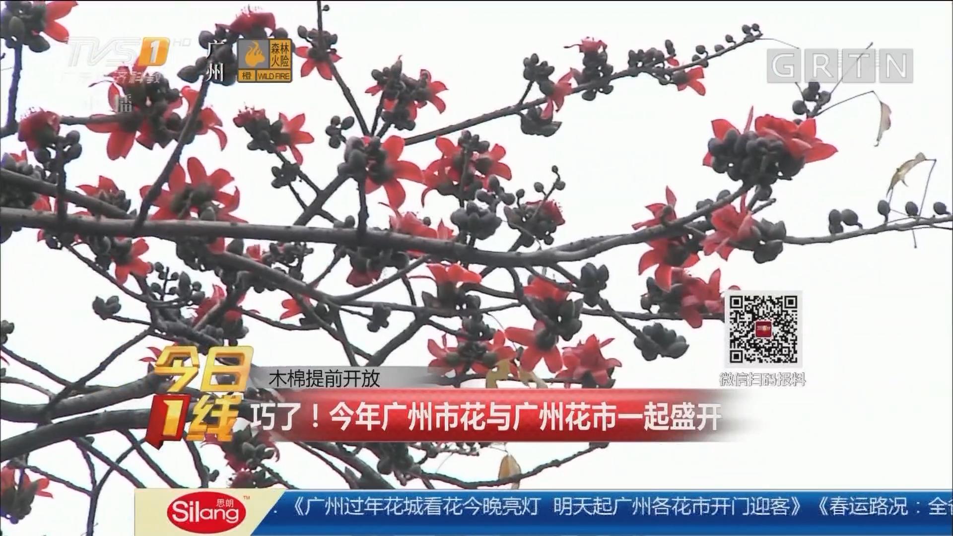 木棉提前开放:巧了!今年广州市花与广州花市一起盛开