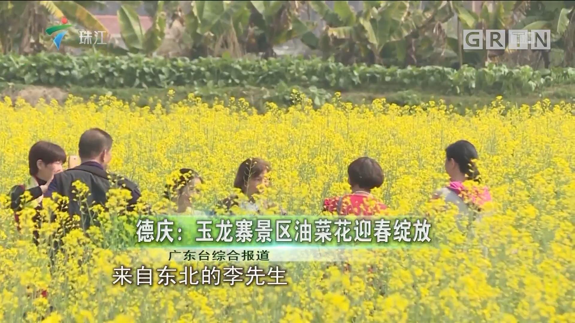 德庆:玉龙寨景区油菜花迎春绽放