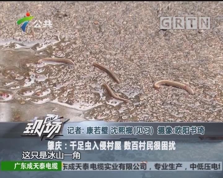 肇庆:千足虫入侵村屋 数百村民很困扰
