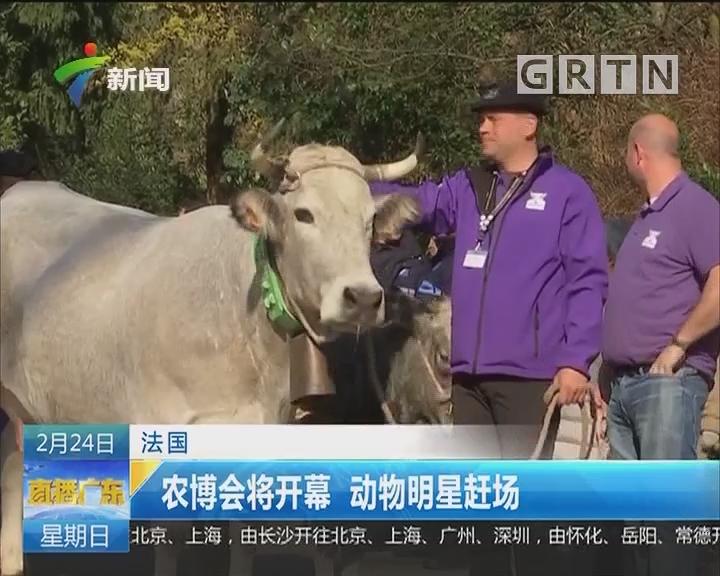 法国:农博会将开幕 动物明星赶场