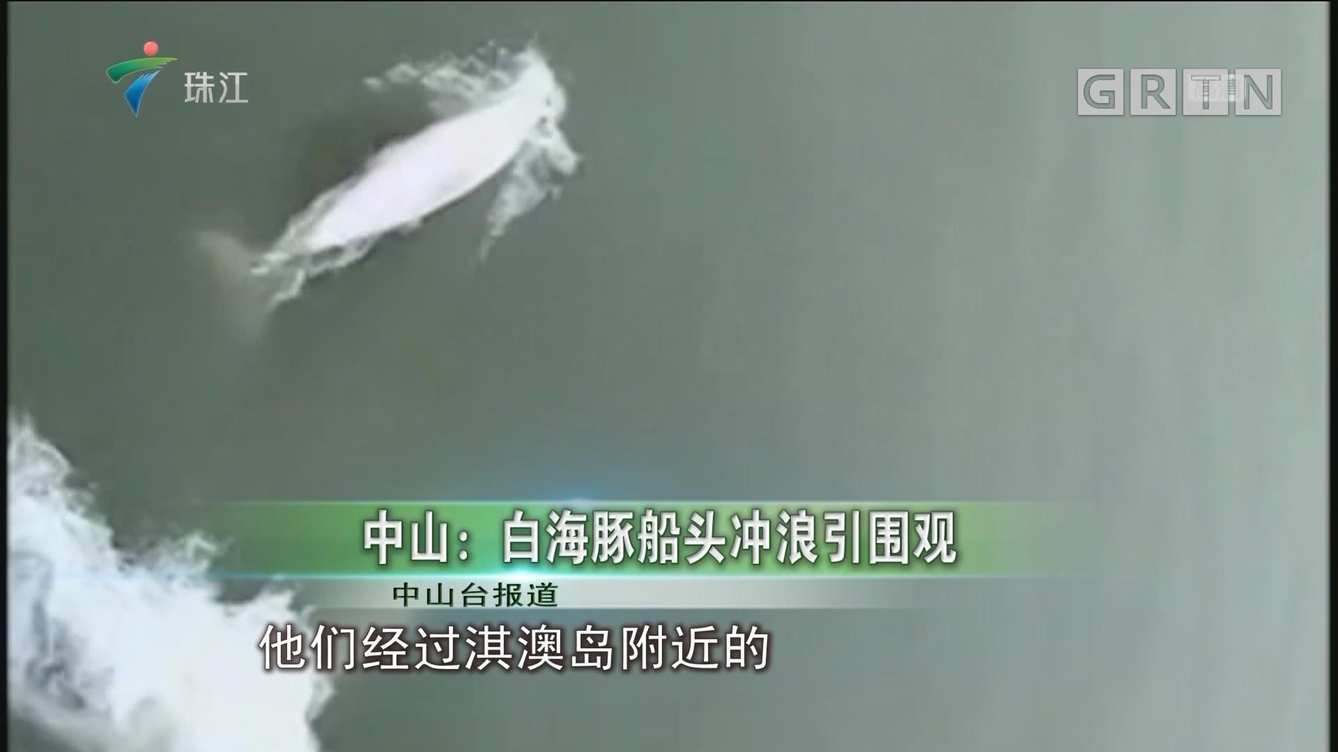 中山:白海豚船头冲浪引围观