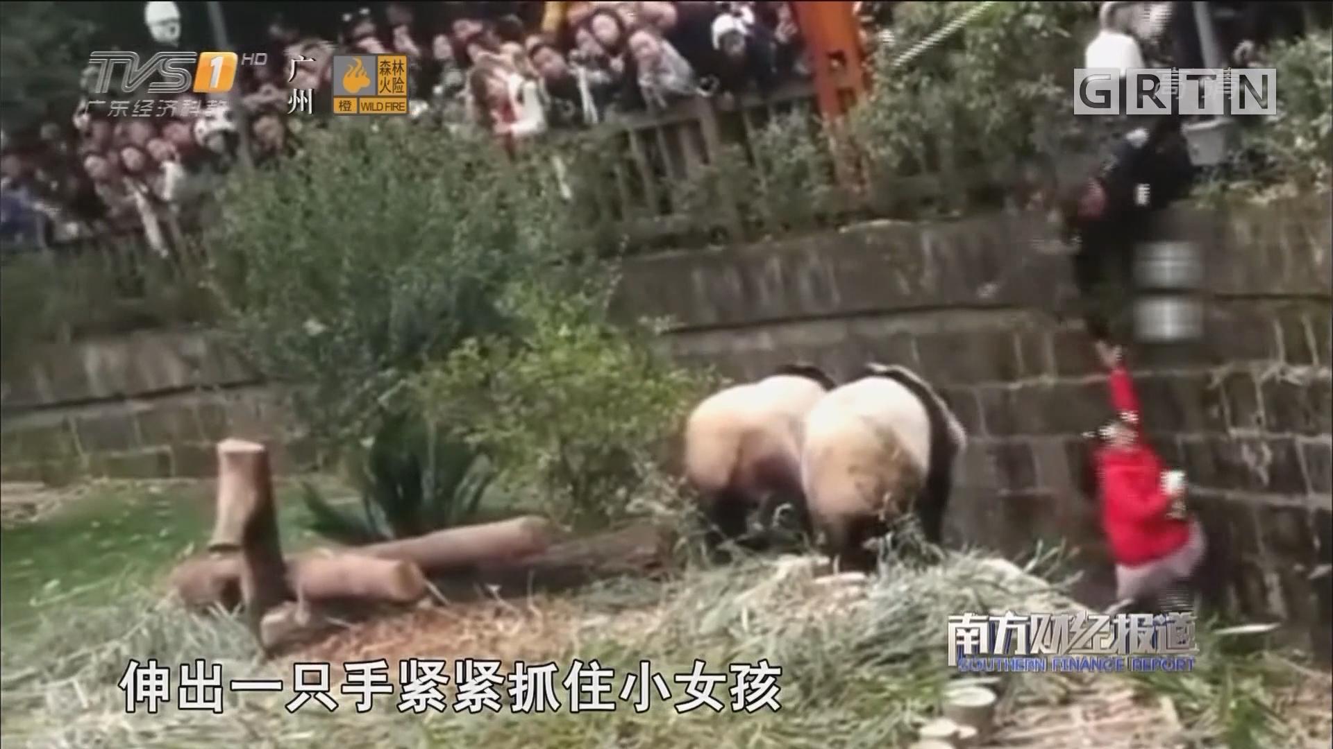 惊险救援!春节看熊猫 女童坠入饲养池