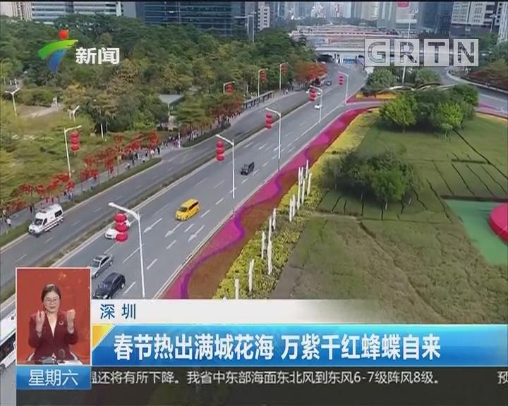 深圳:春节热出满城花海 万紫千红蜂蝶自来
