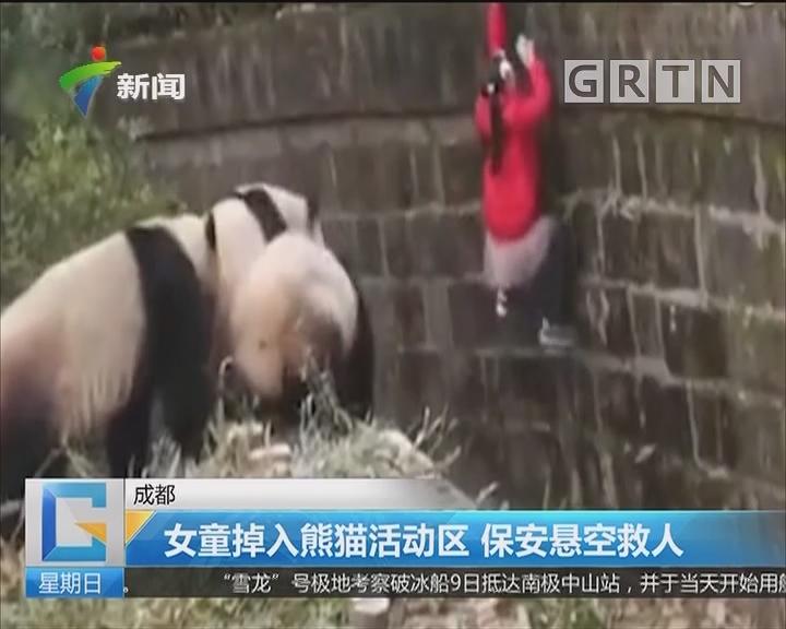 成都:女童掉入熊猫活动区 保安悬空救人