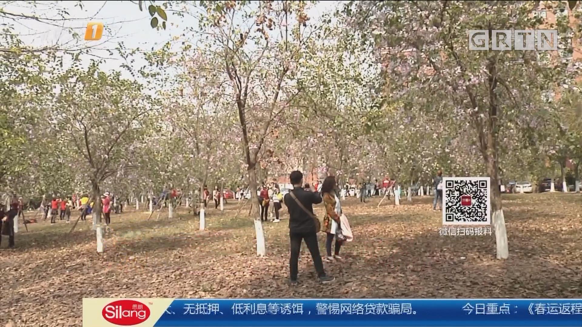 """广州:游客拉下花枝拍照 人美花""""受伤"""""""