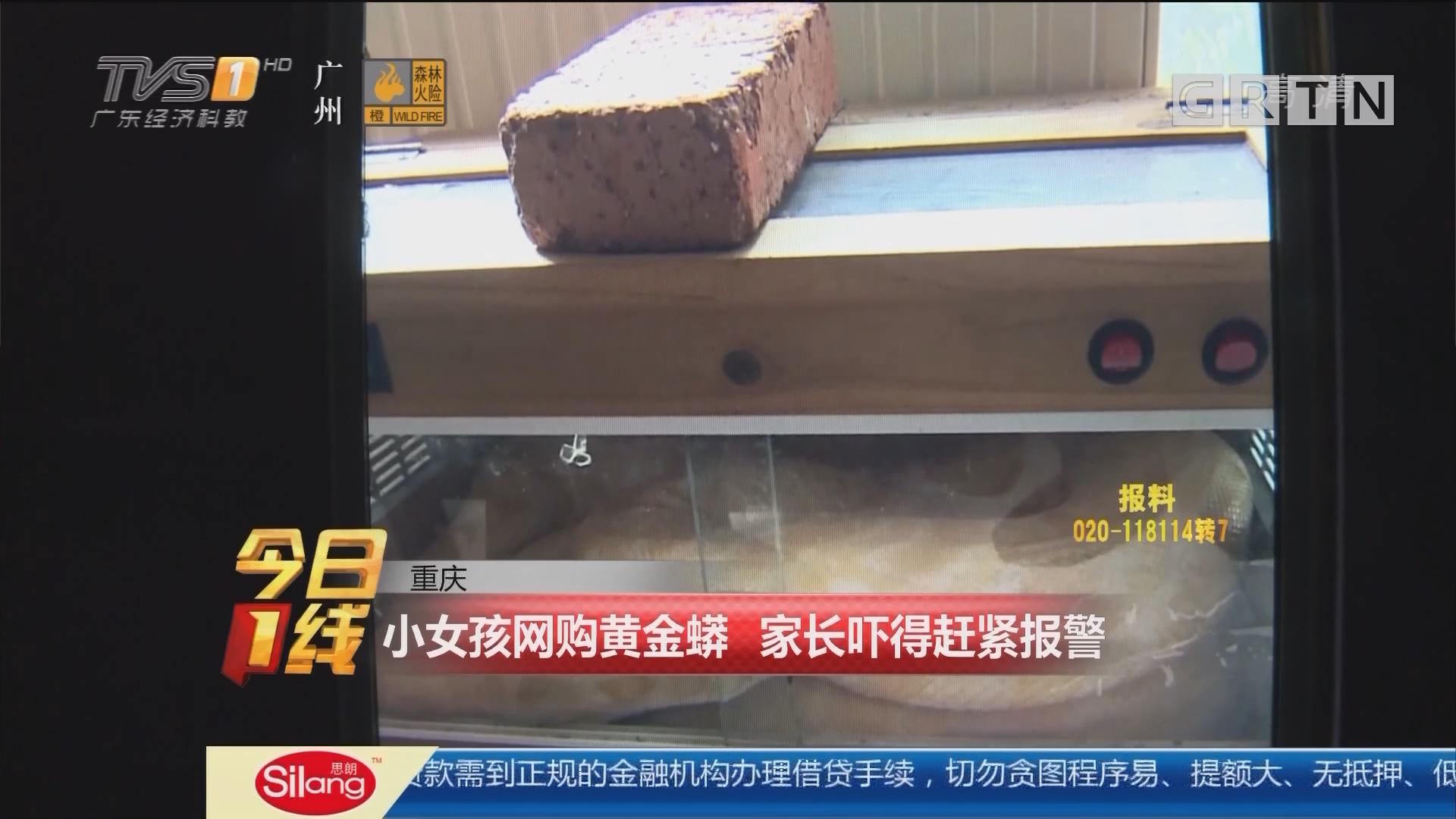 重庆:小女孩网购黄金蟒 家长吓得赶紧报警